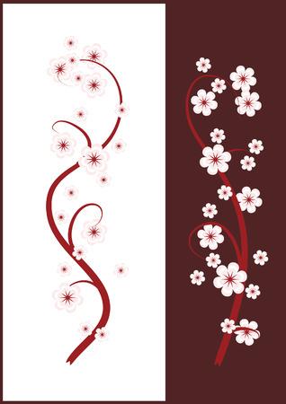 꽃이 만발한: Blossoming cherry branches for white and brown background. 일러스트