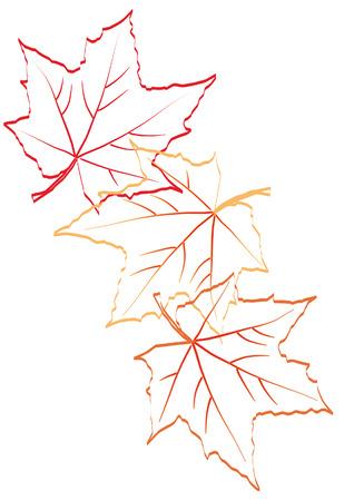 Falling autumn maple leaves. Sketch Illustration