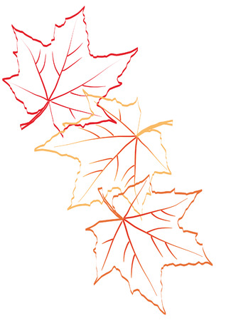 Falling autumn maple leaves. Sketch Illustration
