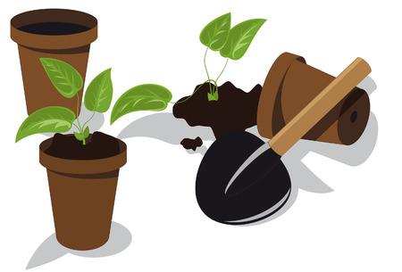 potting soil: transplanting flower seedlings to individual pots Illustration