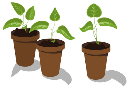seedling growing: Young flower seedlings in pots Illustration
