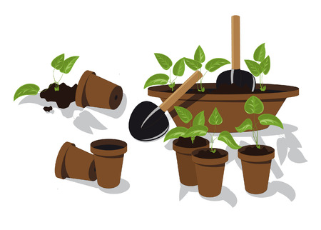 transplanting flower seedlings individual pots Stock Vector - 6932027