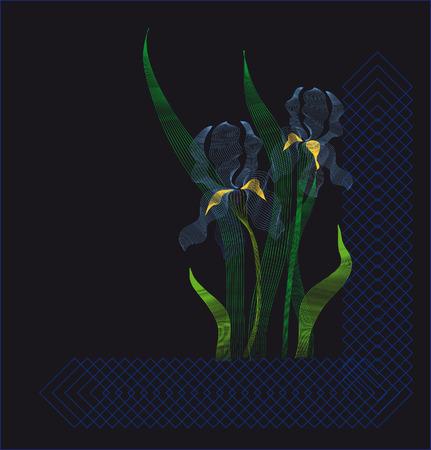 Irises on a black background Ilustração