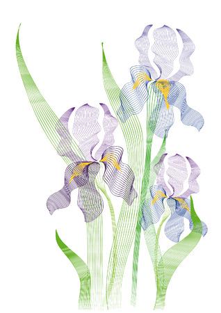 florist: The stylized image of blue swamp irises Illustration