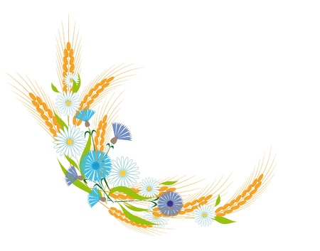 spikes: Vi�eta de orejas, margaritas y cornflowers