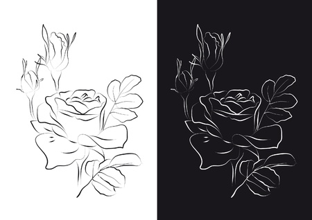 Contour Line Drawing Rose : Sketch of roses on a white and black background royalty free