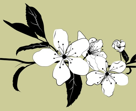 Flowering branch of cherry with a light green background. Illustration. Vector