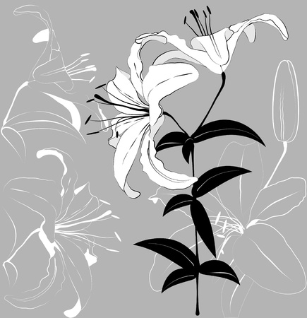 White lilies on a gray background. illustration Illustration