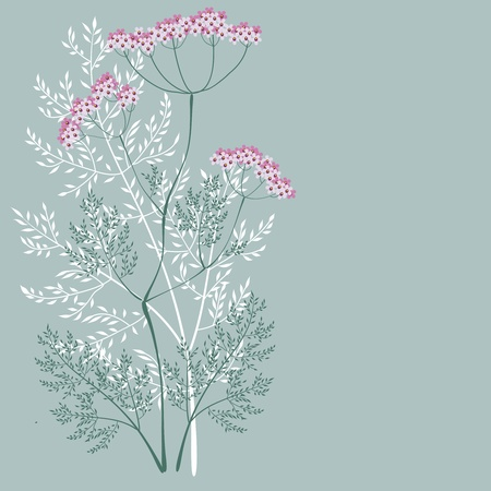 Valerian, a flowering meadow plants on a green background Illustration