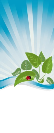 a banner with the young plants and ladybug Stock Vector - 13160100