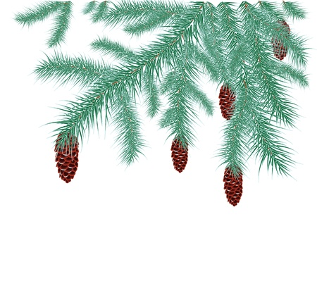 spruce branches with cones covered with hoarfrost on a white background Vector
