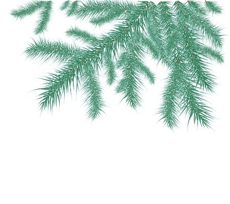 fir takken bedekt met rijp op een witte achtergrond