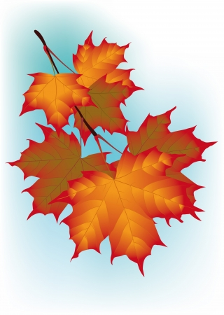 Autumn maple tree branch against the sky Vector