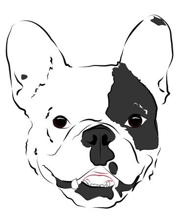 Pleased muzzle French Bulldog Stock Vector - 16957472