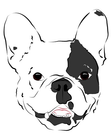 Pleased muzzle French Bulldog Stock Vector - 16957472