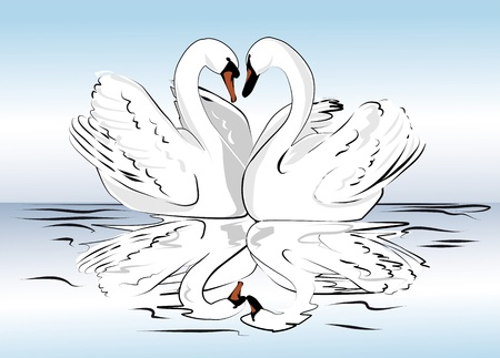 swans: in love with a pair of swans swimming in the water Illustration