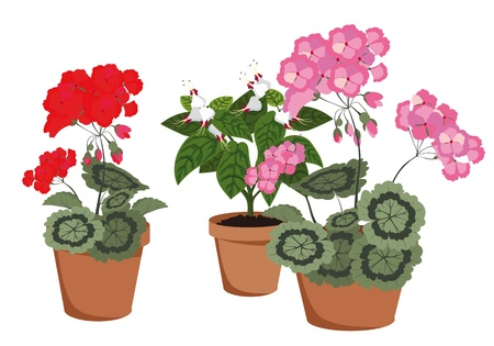 houseplants: flowering houseplants in pots on a white background