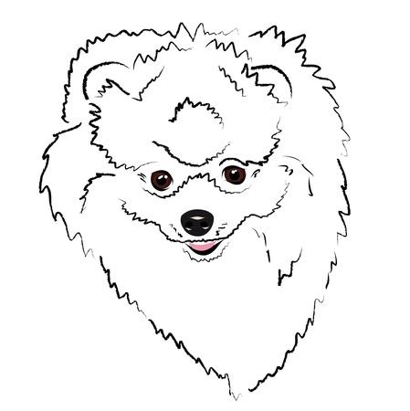 spitz: cheerful face Pomeranian Illustration