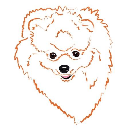 traits: cheerful face Pomeranian Illustration