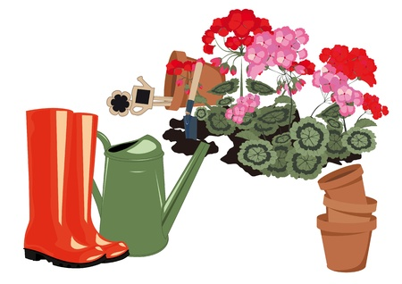 geraniums blooming in the garden rubber boots and watering Illustration