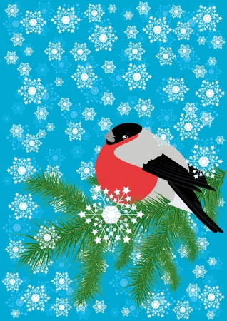 Winter background with bullfinch sits on a branch of spruce Vector