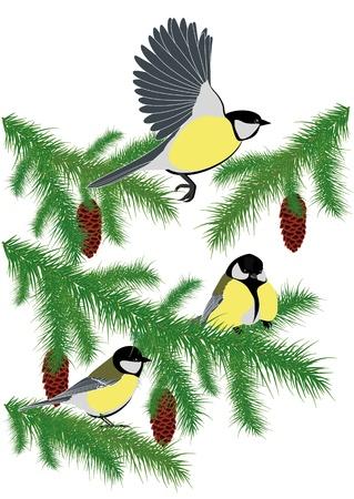 spruce: p�jaros en las ramas de abeto con conos Vectores