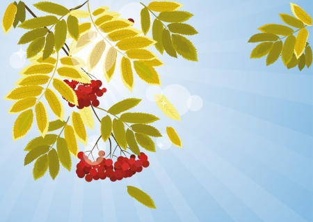Autumn background with leaves and berries of mountain ash Vector