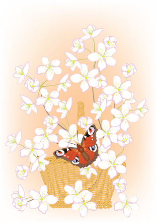flowering branches of cherry in a basket and butterfly Vector
