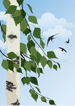 martinet: paysage d'�t� avec des arbres de bouleau, ciel bleu et des hirondelles