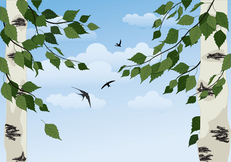 summer landscape with birch trees, blue sky and swallows Vector