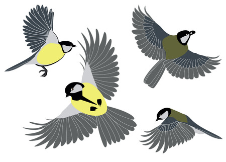 flit: titmouse in flight from different angles on a white background Illustration