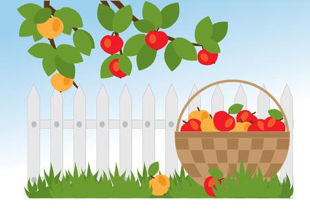 arbol de manzanas: canasta con manzanas y manzanos ramas en el jardín