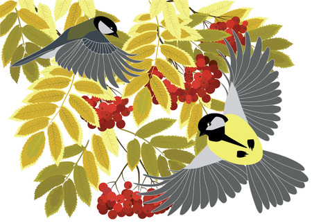 mountain ash: titmouse fly among the branches of a mountain ash