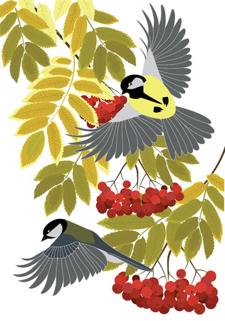 tomtit: titmouse fly among the branches of a mountain ash