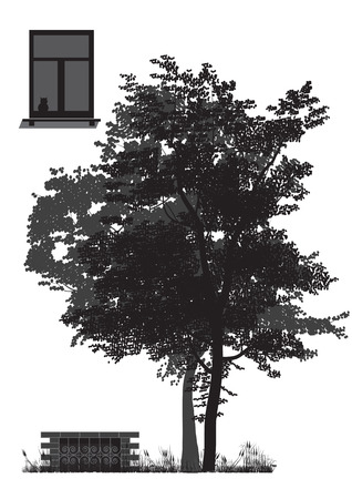 basement: The tree grows in the walls of the house and casts a shadow