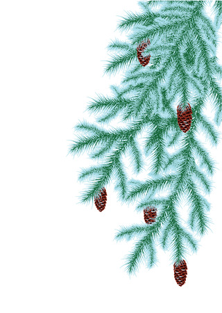 frosted: frosted spruce branches with cones