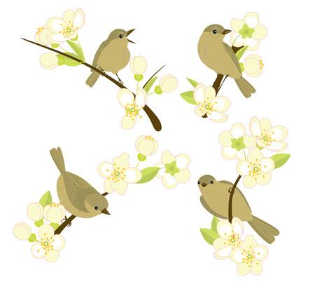flowering: birds sitting on branches of flowering cherries Illustration