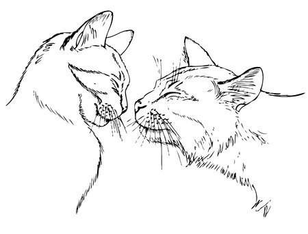 couple in love cats. Sketch on white background