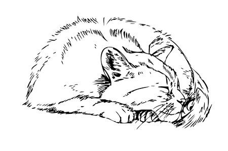 siesta: gatto addormentato. Sketch su sfondo bianco