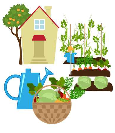 foreground: Small house in the garden, vegetables in the beds, in the foreground fresh vegetables in a basket and watering