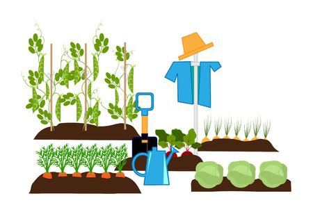 Gemüse in den Betten, Vogelscheuche und Gartengeräte