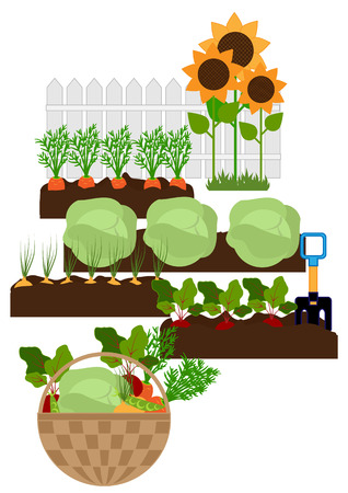 foreground: vegetables in the beds, in the foreground fresh vegetables in a basket