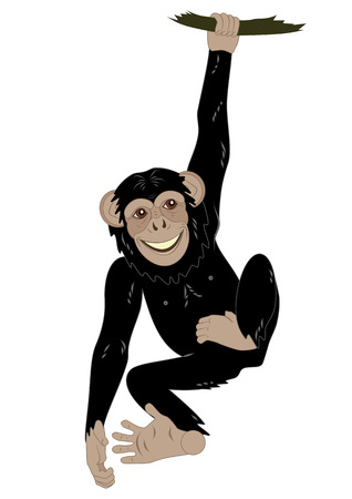 chimpanzees: funny monkey hanging on the vine