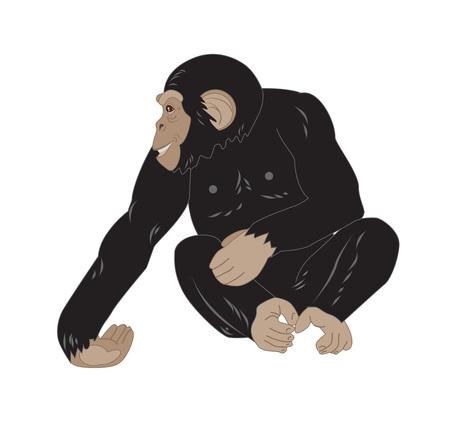 chimpances: mono lindo sentado aislados sobre fondo blanco Vectores