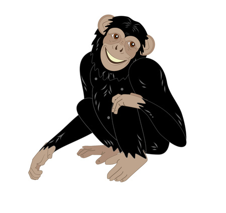 chimpanzees: cute monkey sitting isolated on white background