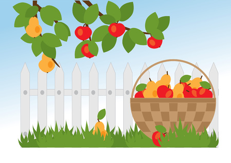 fruit basket: fruit basket and a branch of the apple and pear trees in the garden Illustration