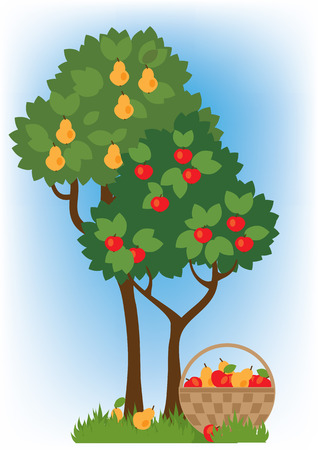 fruit basket: fruit basket and apple and pear trees in the garden