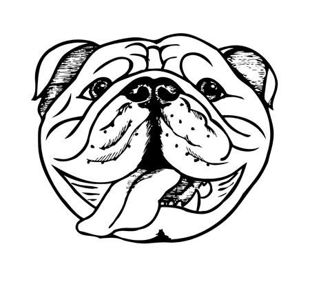 bulldog face, vector illustration