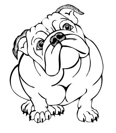 Inglés bulldog, ilustración vectorial