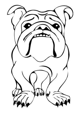english bulldog: English bulldog, vector illustration
